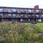 Het Architectuurgesprek Veenendaal vergroening gebouwde omgeving en architectuur (10)